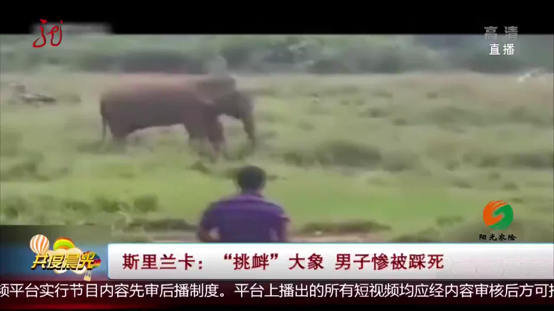 """""""挑衅""""大象 男子惨被踩死"""