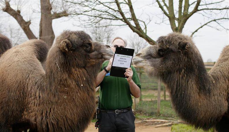 伦敦动物园进行动物年度盘点