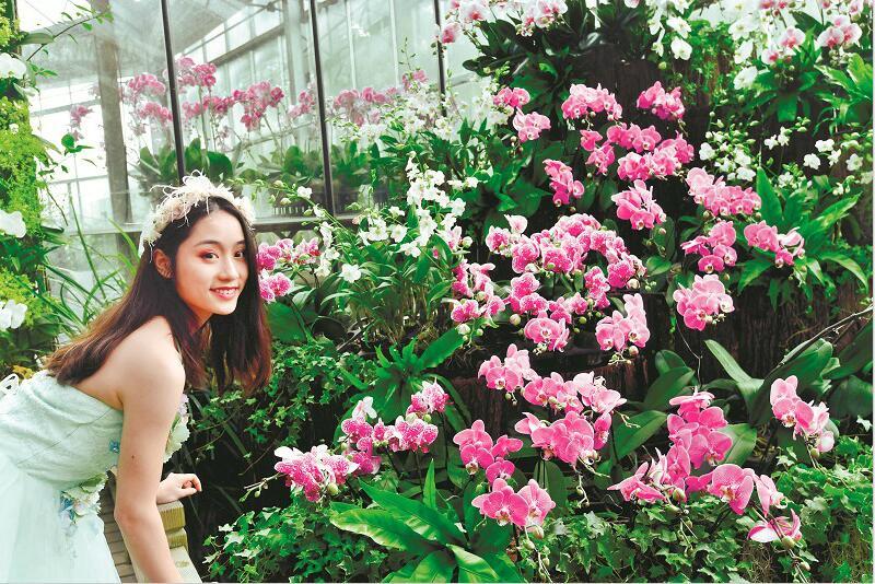 武汉植物园热带兰展开幕 上万株珍奇兰花竞相绽放