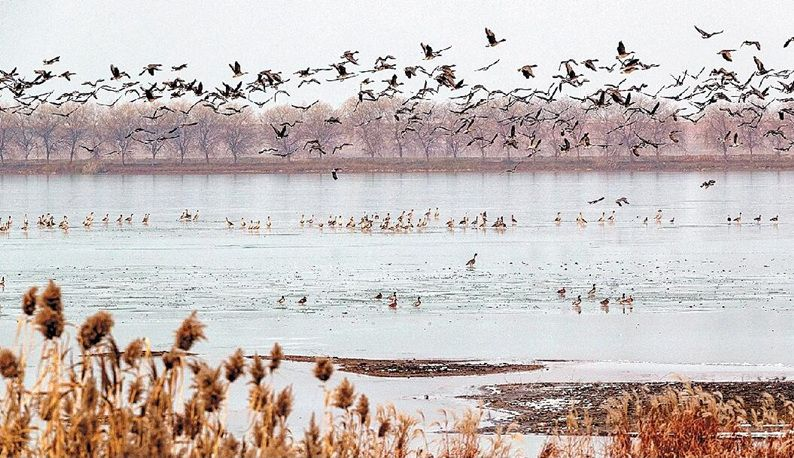 府河迎来数千候鸟
