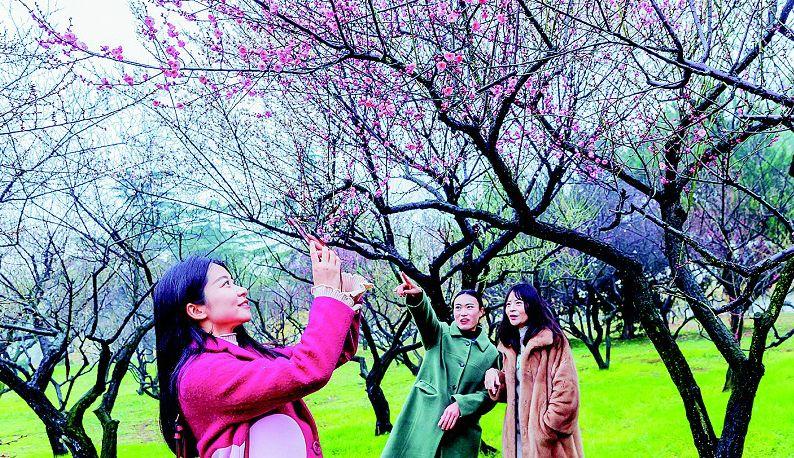 东湖梅花节开幕