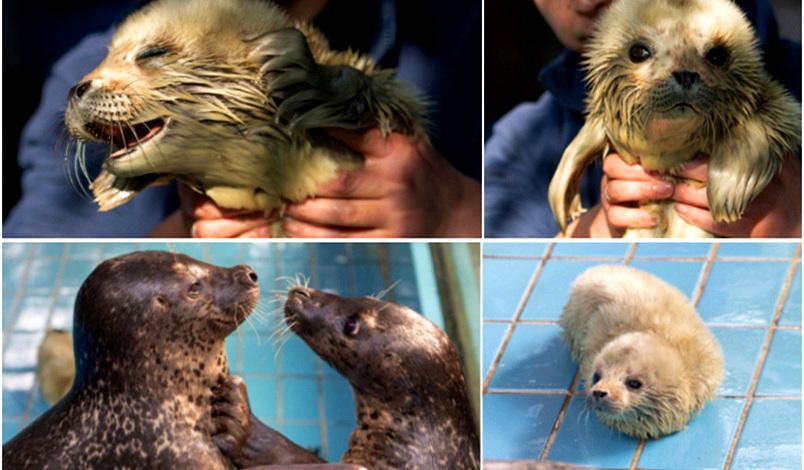武汉东湖海洋世界首个海豹宝宝诞生