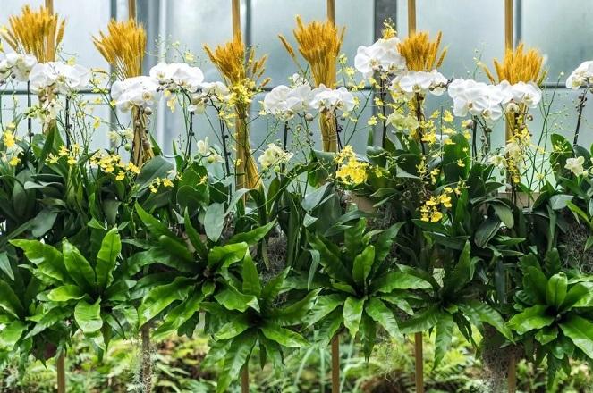 见过巧克力味的兰花吗?快去武汉植物园热带兰花展!