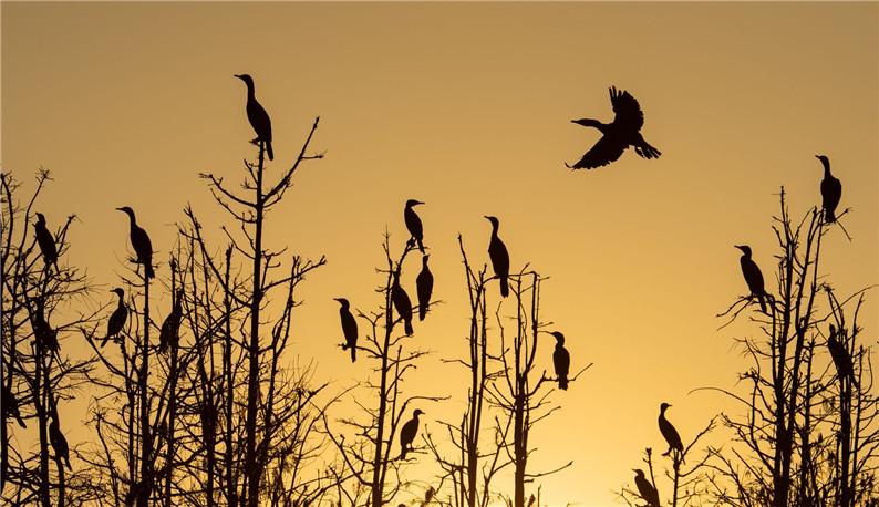 东湖落雁岛 | 城中湿地人鸟相安