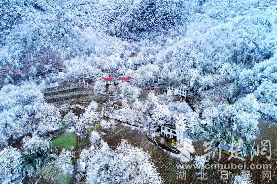 """五峰现""""冰晶森林""""冬景 如梦如幻似童话世界"""