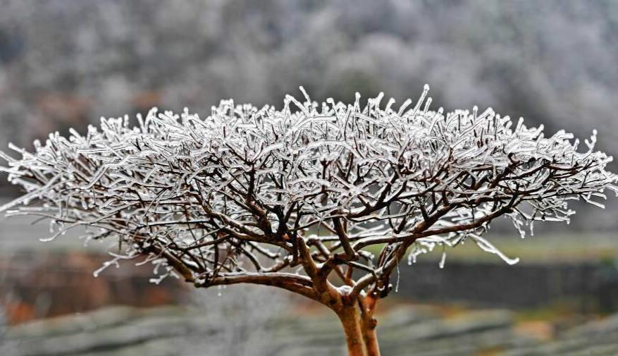 """宜都""""冰树"""" 银装素裹如童话世界"""