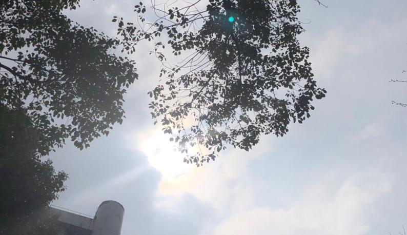 重磅!流浪的太阳回到武汉,你看到了吗?