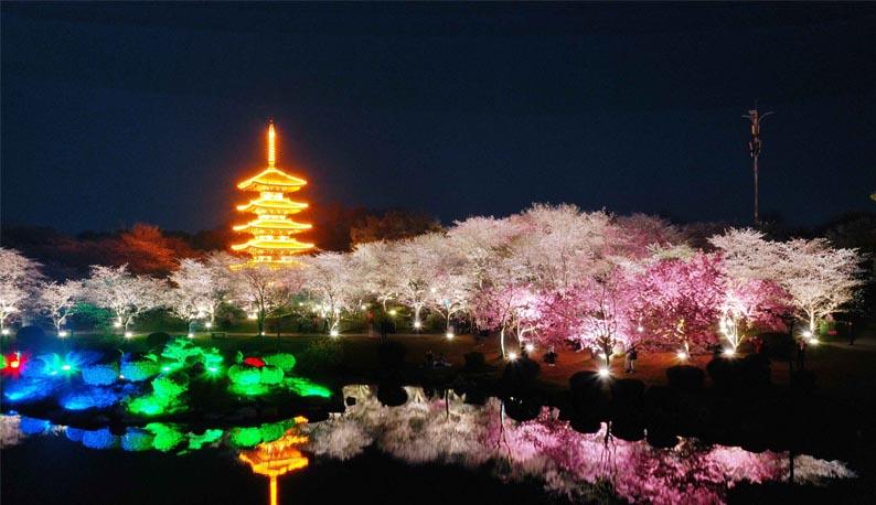 太美了!东湖夜樱如梦似幻