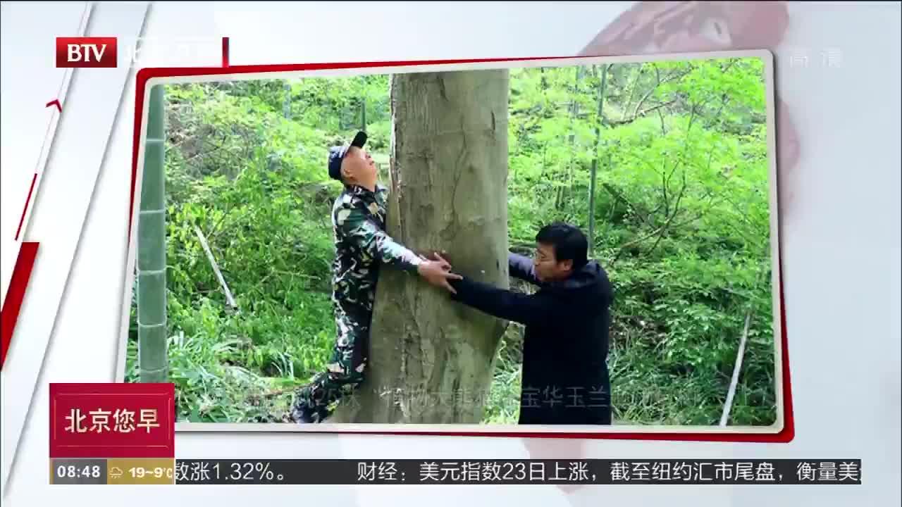 江苏新发现25株宝华玉兰濒危母树