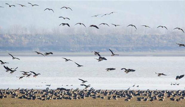 湖北5年新增受保护湿地面积470万余亩