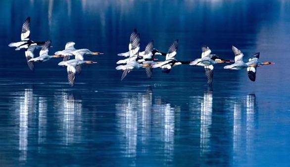 """荆门""""鸟人""""用镜头记录300余种野生鸟类"""