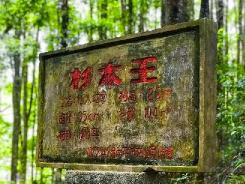 """""""绿色金库""""王台依靠林业打好文旅牌"""