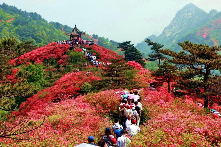 麻城杜鹃文化旅游节