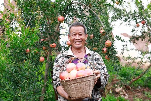 """拼多多联手500农产区上线""""农货节"""",携4亿消费者推动全国尖货上行"""