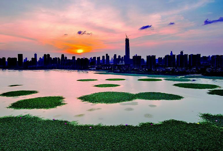 走访多个水生态修复现场  看武汉多个湖泊正在自然回归