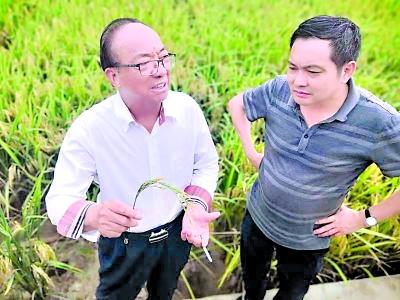 破解粮食供应不足问题 武汉多倍体水稻提供解决方案