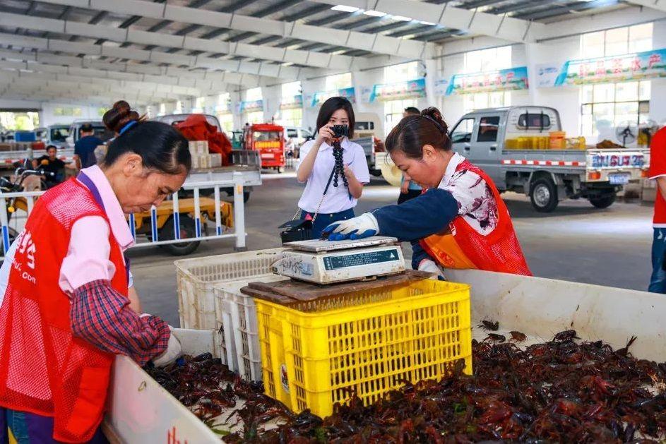 【聚焦】水乡园林青常在 稻花香里龙虾红