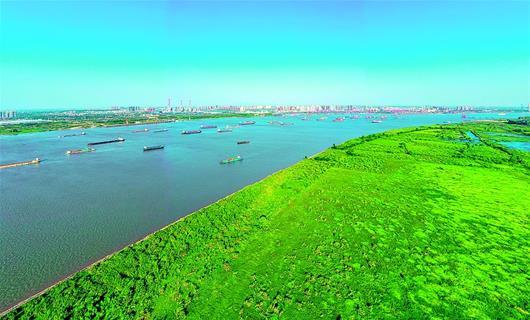 长江水域百舸争流 南岸江滩湿地绿意盎然