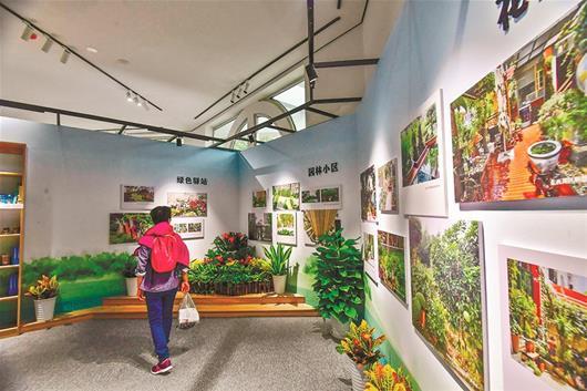 武汉行道树数量70年翻了300多倍