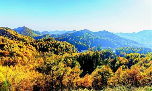 """""""湖北出台国有林场发展规划 聚焦六大建设任务 实施11项重大工程"""