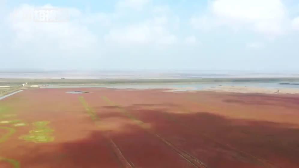 """美翻啦!航拍江苏条子泥湿地秋景""""红地毯"""""""