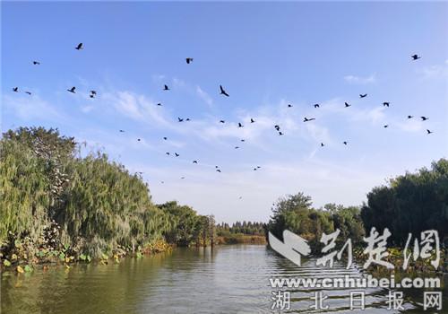 生态当先  朱湖湿地成候鸟乐园