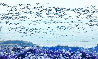 """""""用心保护湿地让珍稀候鸟定居武汉"""