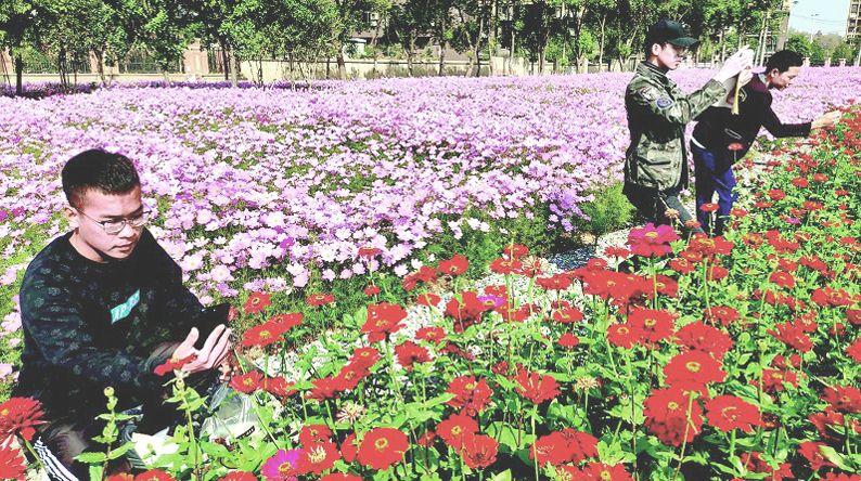 百亩花海竞开放迎来最佳观赏期 武汉又添三处赏花好去处