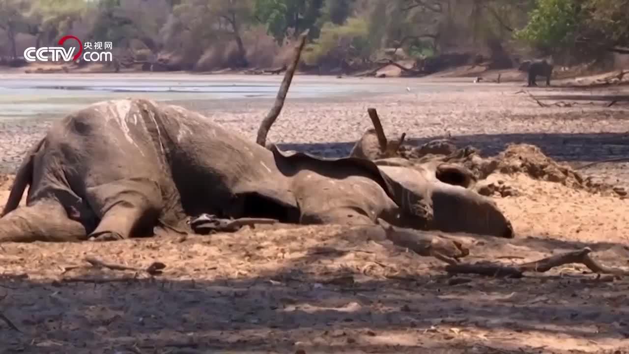 非洲南部遭逢大旱