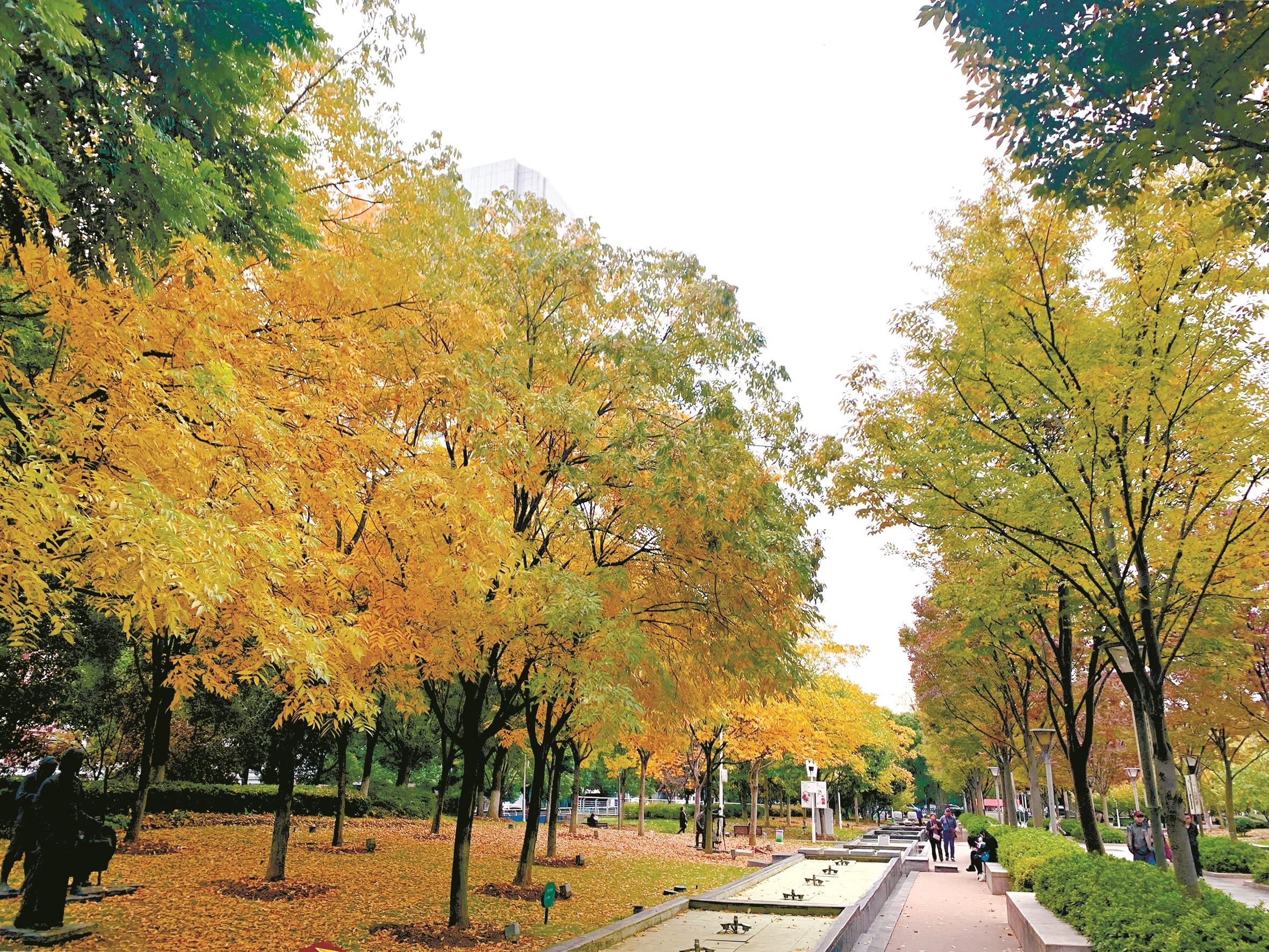 """落叶有着别样韵味  武汉5公园留""""金色地毯""""供游客打卡"""