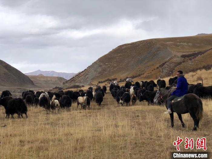 三江源头青海推进绿色有机农畜产品示范省建设