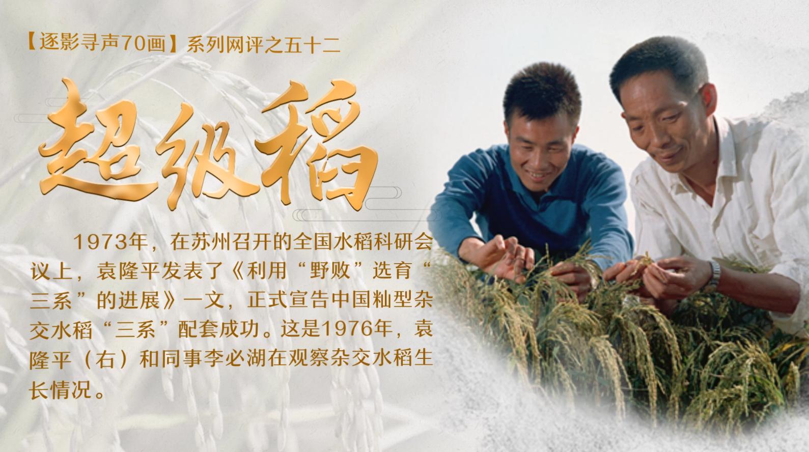 【逐影尋聲70畫】超級稻
