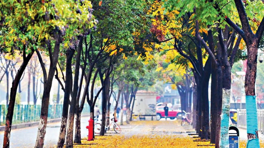 """让""""落叶飘一会儿"""" 武汉公园延时清扫留住诗意秋景"""