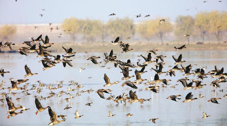 全球極度瀕危鳥類來漢定居 水韻江城豪邁奔向國際濕地城市