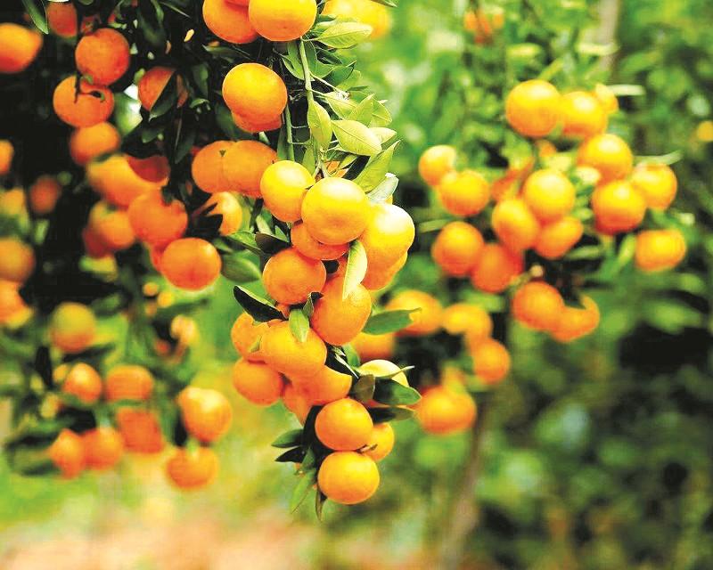 <strong>橘乡的盛会 金色的希望 ——丹江</strong>