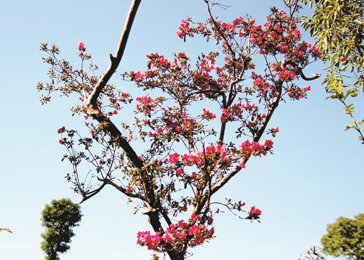 暖风催得杜鹃开  直把初冬当春天