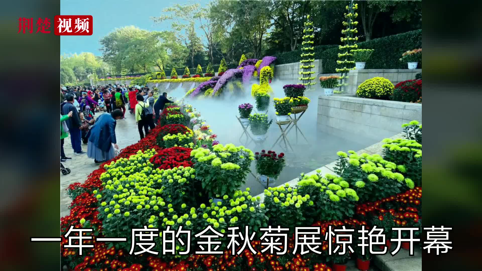 【荆楚拍客】一年一度的金秋菊展惊艳开幕