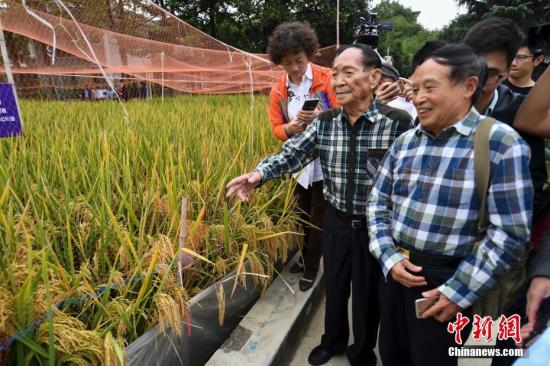 袁隆平团队又有好消息 长江中游双季稻亩产1365公斤