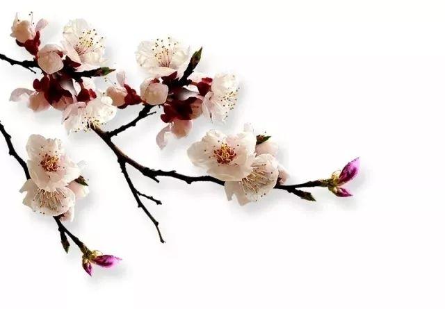 http://www.whtlwz.com/wenhuayichan/64920.html