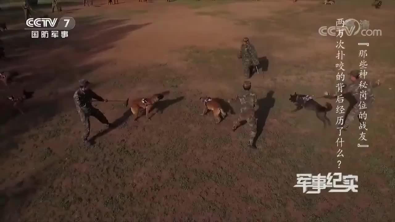 他把军犬训得像狼