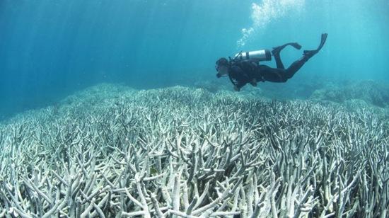 """澳媒:联合国或将取消大堡礁""""杰出普世价值""""称号"""