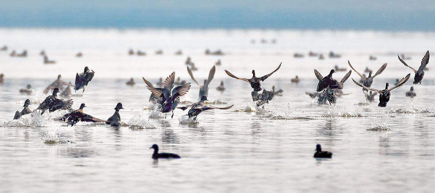 百鸟翔集枝江金湖