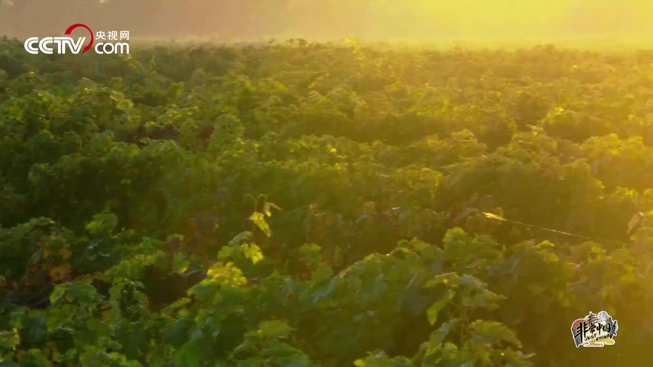 造一瓶顶级国产葡萄酒 拢共分几步
