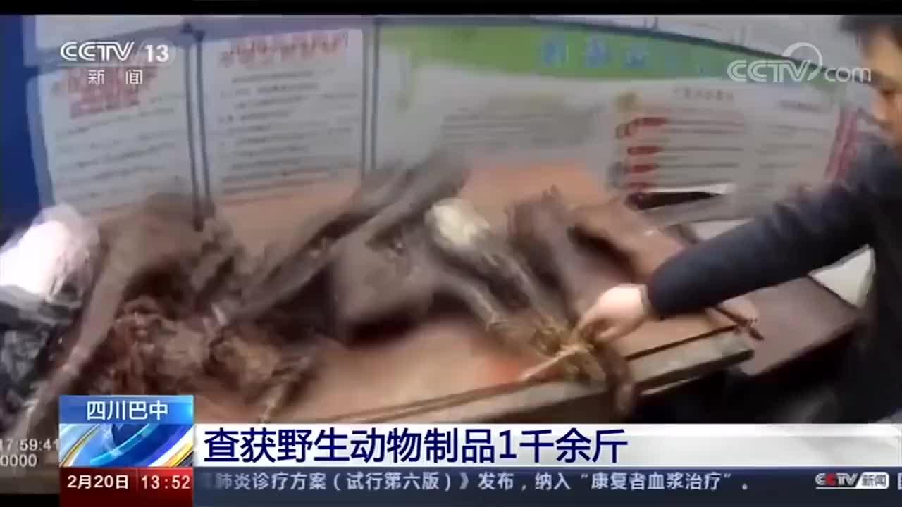 四川巴中查获野生动物制品1千余斤