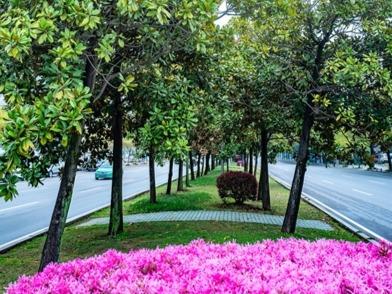 磁湖路如诗如画 一年四季可赏花