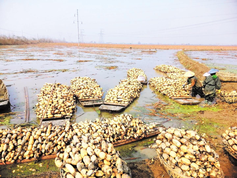 农业农村部和广东等省援手  湖北农产品出村进城销四方