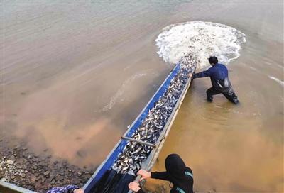 大冶湖增殖放流