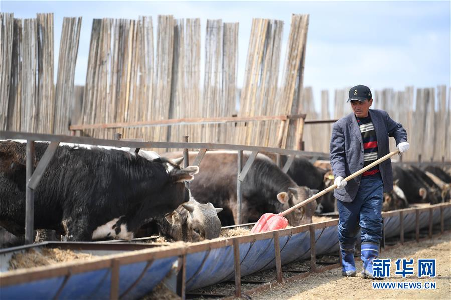 新疆塔城:龙头企业带动农牧民巩固脱贫攻坚成果