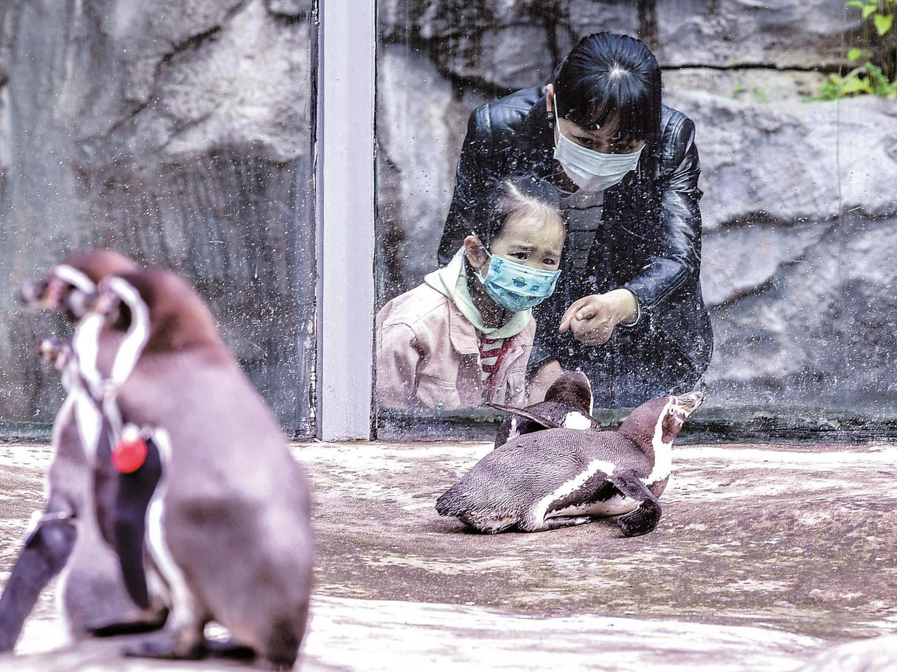武汉动物园恢复开放