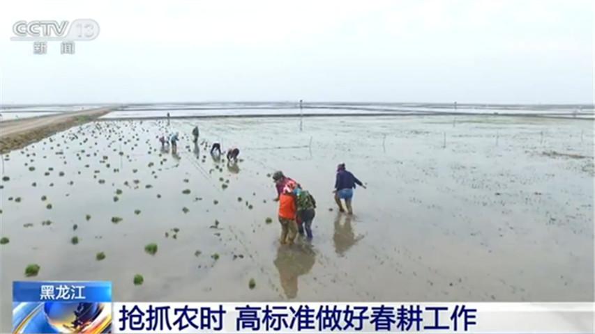 今年黑龙江全省粮食播种面积约2.155亿亩 同比增加43万亩